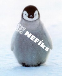 nefiks pingvin copy