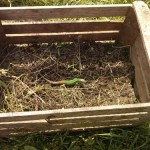 Pridelke z našega vrta podarili OZRK Zagorje ob Savi