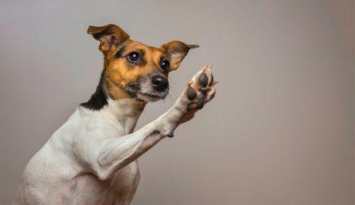 dog-highfive
