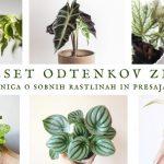 50 odtenkov zelene 2.0