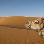 Potopis: Blaž Gutman – Potepanja po Maroku