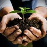 Menjalni krog: Izmenjava semen in sadik