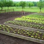 Praktično načrtovanje vrta