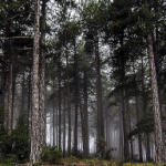 Mednarodno prostovoljstvo: EVS Forest Quest (maj – junij 2018)